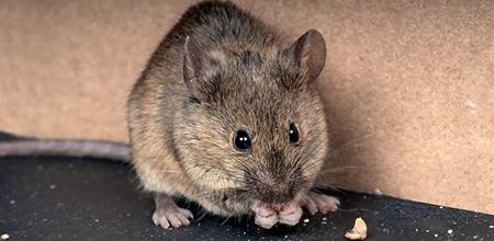 Rodent Control Service Charleston SC