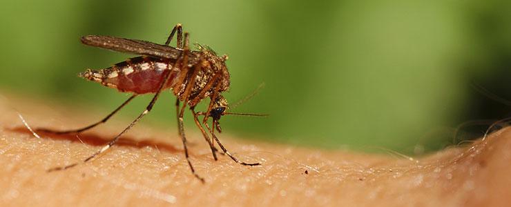 Mosquito Control Service Charleston, SC