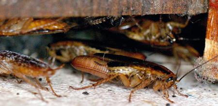 Pest Control Charleston SC