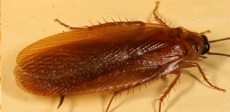 Charleston Pest Control