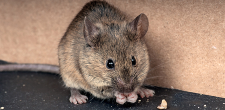 Rodent Control Service Charleston SC